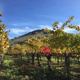 Nedgång i vingårdarna arkivfoto