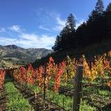 Nedgång i vingårdarna arkivfoton