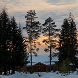 Nedgång i vinterträt Royaltyfria Bilder