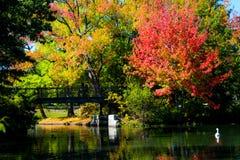 Nedgång på Roger Williams Park, försyn, RI Royaltyfri Foto