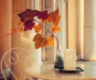 Nedgångbakgrund - trädfilial med färgrika nedgångsidor i vasen på kafétabellen Nedgångsammansättning arkivfoton