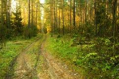 Nedgångbana i skog arkivfoton