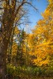 Nedgångberg Forest Landscape royaltyfria bilder