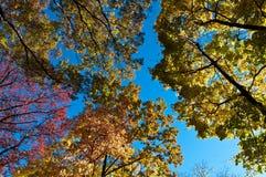 NedgångCentral Park NY Royaltyfria Bilder