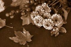 Nedgången blommar i sepia Arkivbilder