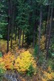 Nedgången färgar den Oregon vildmarken Royaltyfri Bild