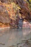 Nedgången färgar i dalen av den jungfruliga floden i Zion National Park arkivfoton