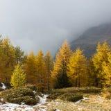 Nedgången färgar i högt berg i en molnig dag Ayas dal, Aosta Italien Arkivfoto