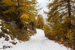 Nedgången färgar i högt berg i en molnig och dimmig dag Ayas dal, Aosta Italien royaltyfri foto