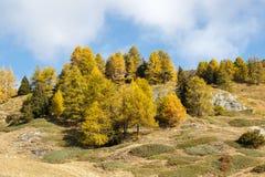 Nedgången färgar i högt berg i morgonen Ayas dal, Aosta Italien Arkivfoton