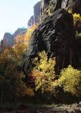 Nedgången färgar i klyftan av den jungfruliga floden i Zion National Park Royaltyfri Foto