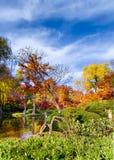 Nedgången färgar i trädgårdarna Fotografering för Bildbyråer