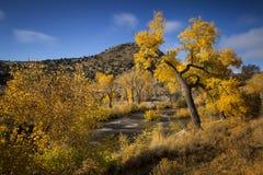 Nedgången färgar längs Carson River nära Carson City, Nevada Royaltyfria Foton