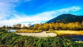 Nedgången färgar runt om det Nicomen träsket, en filial av Fraser River, som den flödar till och med Fraser Valley arkivfoto