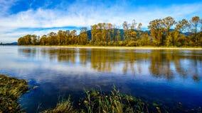 Nedgången färgar runt om det Nicomen träsket, en filial av Fraser River, som den flödar till och med Fraser Valley arkivfoton