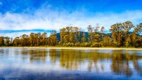 Nedgången färgar runt om det Nicomen träsket, en filial av Fraser River, som den flödar till och med Fraser Valley royaltyfri fotografi