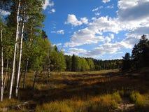 Nedgången färgar start i Colorado royaltyfri foto