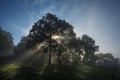 Nedgången färgar trädet på solig dag Arkivbilder