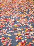 Nedgången lämnar bakgrund - materielfoto Royaltyfri Bild