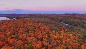 Nedgångfärg från luften Royaltyfri Foto