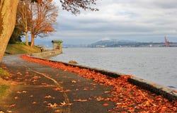 Nedgångfärg, höstsidor, stadslandskap i Stanley Paark, i stadens centrum Vancouver, British Columbia Fotografering för Bildbyråer