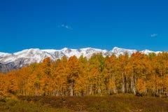 Nedgångfärg i den krönade butten Colorado Arkivbilder