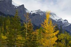 Nedgångfärg i kanadensiska steniga berg arkivfoton