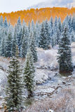 Nedgångfärg och insnöade Colorado royaltyfria bilder