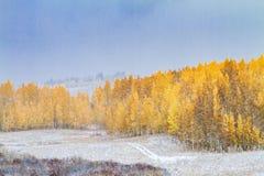 Nedgångfärg och insnöade Colorado arkivbild