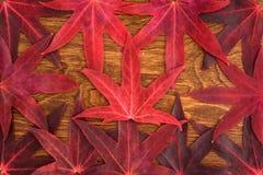 Nedgångfärg - röda sidor Arkivbilder