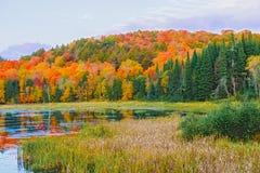 NedgångfärgAlgonquin parkerar, Ontario, Kanada Arkivbilder