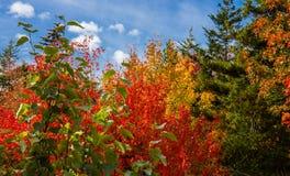Nedgångfärger i acadianationalpark arkivfoton