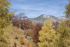 Nedgångfärger i bergen Arkivfoto