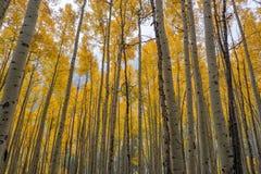 Nedgångfärger i den krönade butten, Colorado arkivbilder