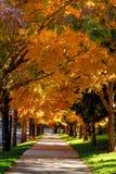 Nedgångfärger i Denver Colorado Tech Center Arkivfoto