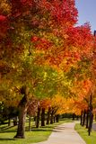 Nedgångfärger i Denver Colorado Tech Center Arkivbild