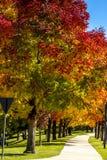 Nedgångfärger i Denver Colorado Tech Center Royaltyfria Bilder