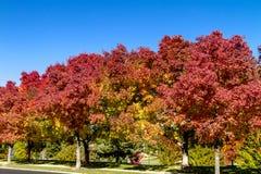 Nedgångfärger i Denver Colorado Tech Center Royaltyfri Foto