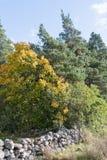 Nedgångfärger i en grön skog Arkivfoton