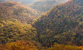 Nedgångfärger i skog på tunnbindare vaggar delstatsparken WV arkivbilder