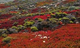 Nedgångfärger i stora Sur Kalifornien Arkivbild