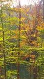 Nedgångfärger i träd Royaltyfri Foto