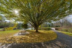 Nedgångfärger på brittiska samväldet sjön parkerar Royaltyfri Foto