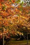 Nedgångfärger på den BogueChitto delstatsparken royaltyfri foto