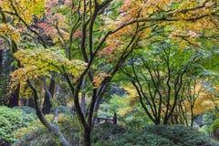 Nedgångfärger på den Portland japanträdgården Arkivbilder