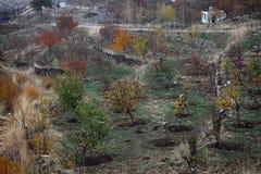Nedgångfärger på fruktbara träd Arkivbild