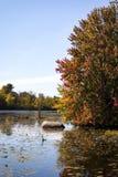Nedgångfärger på gyttjasjön Royaltyfri Foto