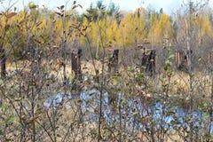Nedgångfärger reflekteras i en flod i Wisconsin Arkivbild