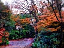 Nedgångfärgerna av en Japan trädgård Arkivfoton