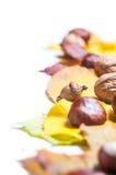 Nedgångfrukt på trä Nedgångfrukt och grönsaker Royaltyfria Foton